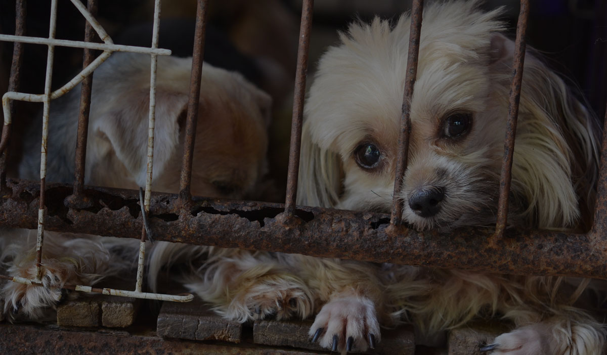 Neglected puppies in cage