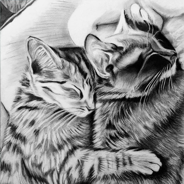 kitties sketch